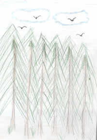 Drawing: birds and trees