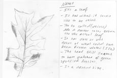 Sketch and notes of leaf