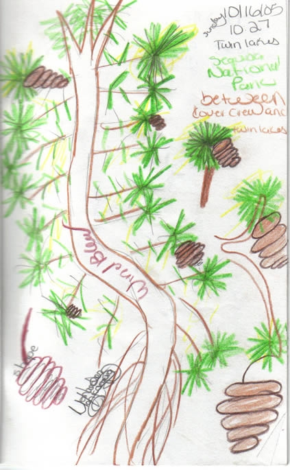 scanned image: field journal sketch