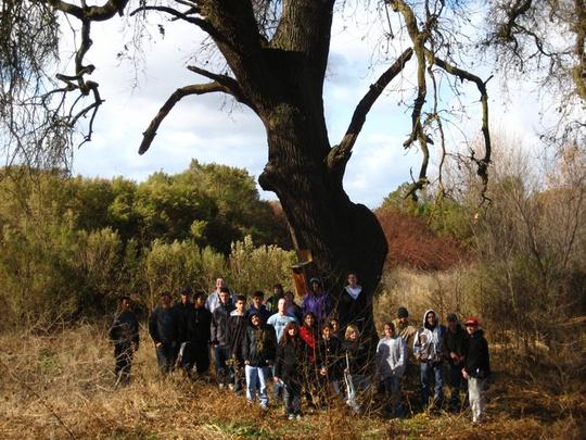 group under oak