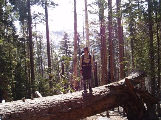 Jesse on tree trunk