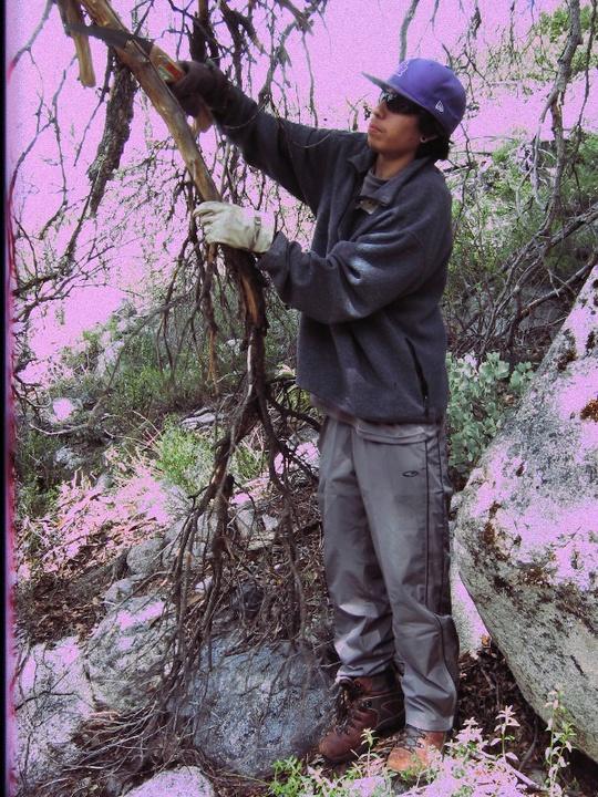 Eddie cuts tree