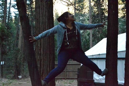 Jeimy Trees