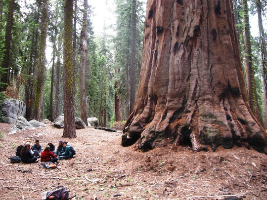 Group Circle Sequoia