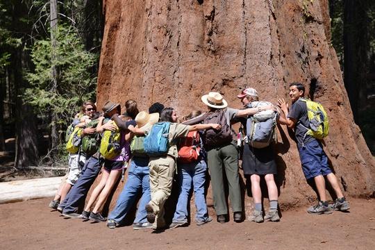 Hug A Sequoia