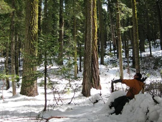 Dino Snowball Throw