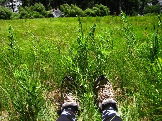 Meadow Feet