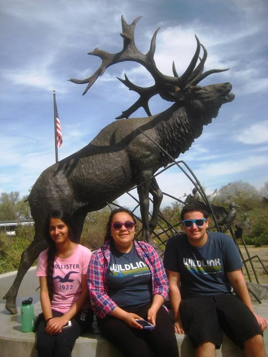 Elk Statue
