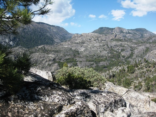 Group Landscape
