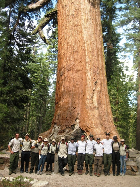 Mariposa Grove Group