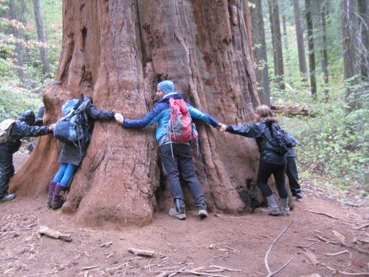 Sequoia Hug