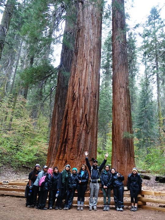 Group Sequoias