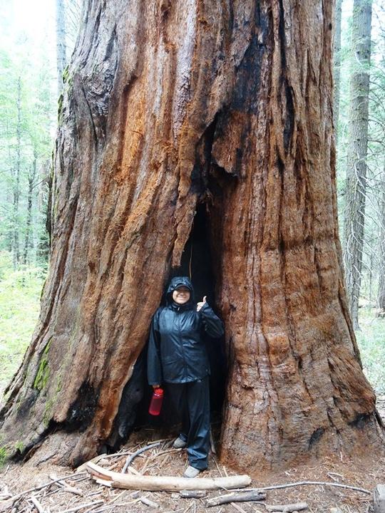 Nayeli Sequoia