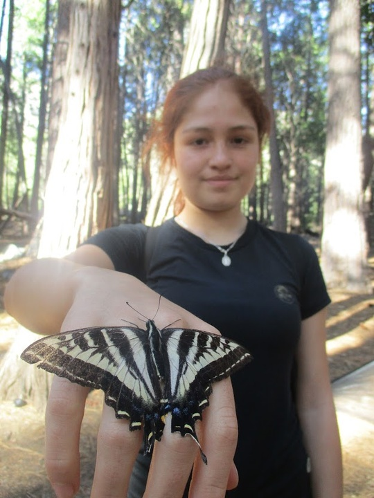 hand butterfly 2